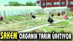 SAKEM Organik Tarım Üretiyor