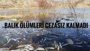 Balık ölümleri cezasız kalmadı