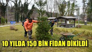 10 yılda 150 bin fidan dikildi