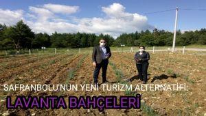 Safranbolu'nun yeni turizm alternatifi: Lavanta bahçeleri