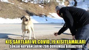 Kış şartları ve Covid-19 kısıtlamaları sokak hayvanlarını zor durumda bırakıyor
