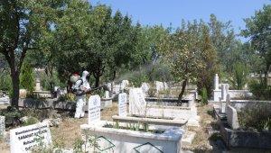 Safranbolu'da fıstık ağaçları ilaçlanıyor
